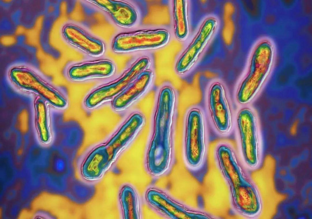 马略卡岛一华人餐馆或致10人沙门氏菌中毒