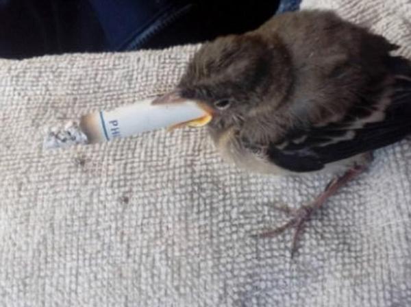 残忍!俄少年晒麻雀吸烟照片或面临一年监禁
