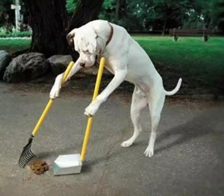 政府启用DNA检测狗粪便找出主人罚款! 网友: 测小偷DNA说没钱!