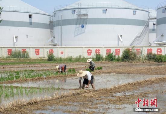 中国将三大粮食作物制种纳入中央财政农业保险保险费补贴目录