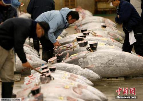 金枪鱼国际会议开幕 日本拟提高捕捞量或遭反对