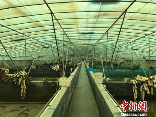 """湖州吴兴:龟鳖整治打""""根基"""" 创渔业转型发展先行区"""