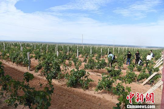 """甘肃张掖戈壁滩农民的""""蜕变"""":开酒庄搞旅游"""
