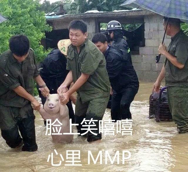 在洪水中获救的小猪火了 被网友做成表情包