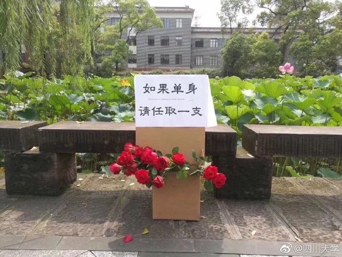 四川大学惊现玫瑰花自取点:单身请任取一支